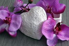 Orchids bloom Stock Photos