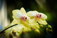 Orchids bloom. Beautiful close up flowers at daylight Stock Photo