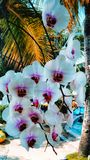 orchids are blooming in the garden royalty free stock photo