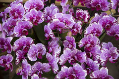 Orchids blossom. Group shot of orchids in the garden stock photo