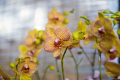 Orchids blossom. Group shot of orchids in the garden royalty free stock images