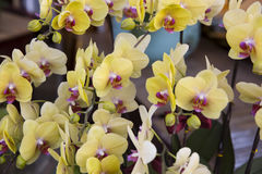 Orchids blossom. Group shot of orchids in the garden royalty free stock photo