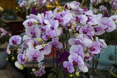 Orchids blossom Royalty Free Stock Photos