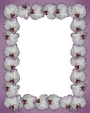 Orchids border purple Stock Images