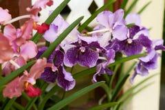Orchids in botanical garden at Kuala Lumpur Stock Photos