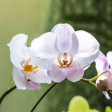 Orchids in the botanical garden Stock Photos