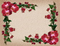 Orchids and Bougainvillea floral border royalty free stock photos