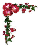 Orchids and Bougainvillea red floral border Stock Photography