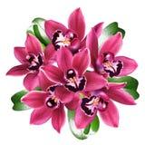Orchids bouquet Stock Images