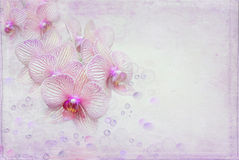 Orchids and bubbles Royalty Free Stock Photo