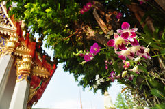 Orchids in buddhist temple Royalty Free Stock Photography