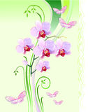 Orchids and butterflies Stock Images