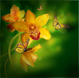 Orchids with a butterfly on the coloured Royalty Free Stock Photos