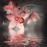 Orchids with a butterfly Stock Photos