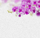 Orchids on canvas Royalty Free Stock Photos