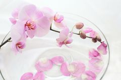 Orchids care Royalty Free Stock Photography