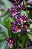 Orchids close up at botanical garden Royalty Free Stock Images