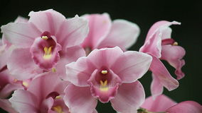 Orchids close up stock video
