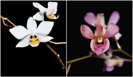 Orchids Collage Royalty Free Stock Image