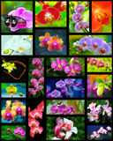 Orchids collage Stock Photo