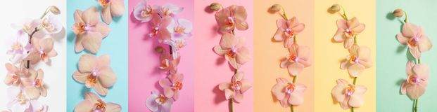 Orchids on paper background Royalty Free Stock Photo