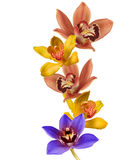 Orchids. Colorful orchids isolated on white, forming a frame Royalty Free Stock Photography