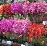 Orchids Competition Stock Images