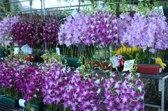 Orchids Competition Stock Image