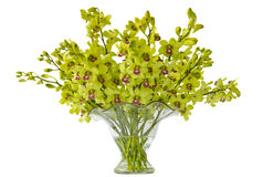 orchids cymbidium vase Στοκ Εικόνα