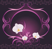 Orchids in the decorative frame Royalty Free Stock Photos