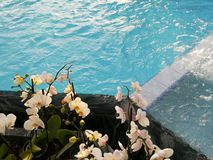 Orchids on the edge of the pool Stock Photography