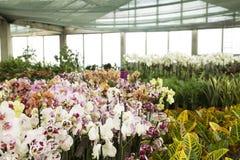 orchids royaltyfri fotografi