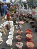 orchids för mong för marknad för kong för blommahong kok Royaltyfria Bilder