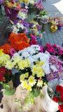 orchids för mong för marknad för kong för blommahong kok Fotografering för Bildbyråer