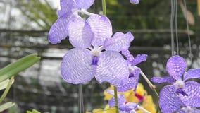 orchids fiore, pianta, orchidea archivi video