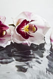 Orchids floating on water Stock Images