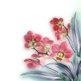 Orchids. Floral background of tropical orchids Stock Photos