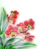 Orchids. Floral background of tropical orchids Royalty Free Stock Photo