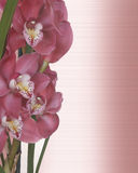 Orchids Floral Satin Invitation border Stock Photography