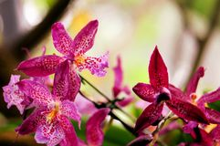 Orchids, Florida, USA Royalty Free Stock Image
