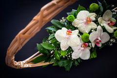 Orchids flower arrangement Stock Photography