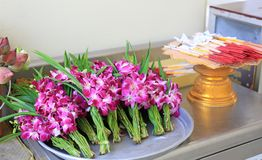 Orchids flower for Buddhist religious ceremony.  stock photo