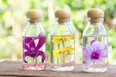 Orchids  flower in glass bottles Stock Image