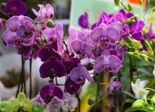 Orchids. Flower market. Hong Kong. Stock Photos