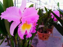 Orchids, flowers, beautiful, beautiful colors, multicolored, in the garden, resting, free stock photography