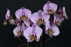 Orchids, Flowers, Blossom, Bloom Stock Photo