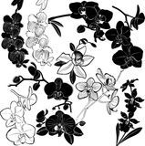 Orchids flowers. Orchids collection flowers  flora plant Royalty Free Stock Photos