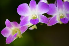 Orchids abstract Stock Image