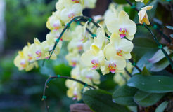 Orchids flowers royalty free stock photos