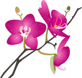 Orchids flowers Stock Images